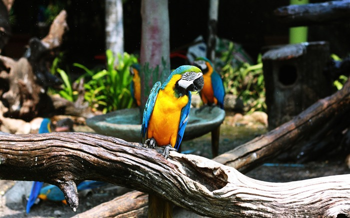 Zoo branch colorful cute parrot bird Views:883