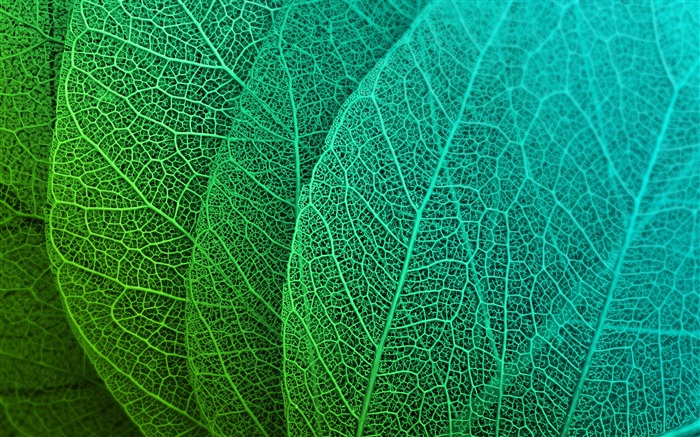Abstract design green leaves closeup Views:1186