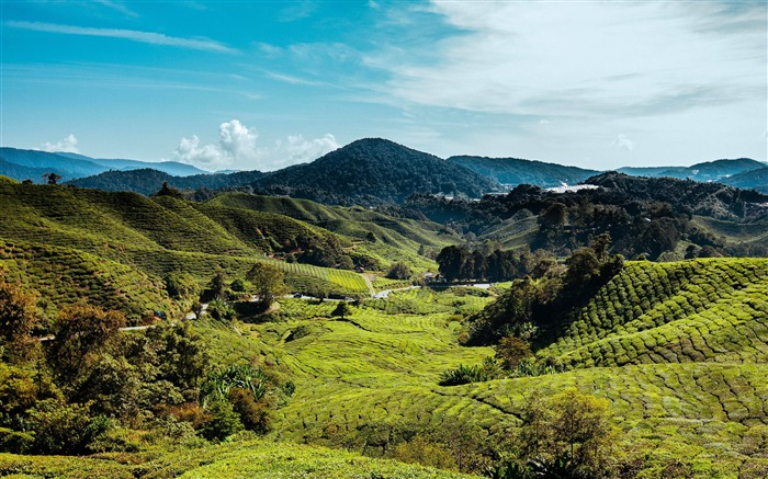 Malaysia Cameron Highlands Hills Meadow Views:363