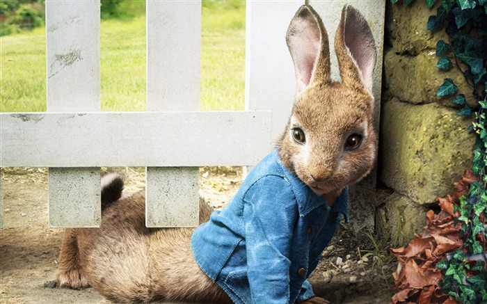 Peter Rabbit 2018 HD Movie Views:3022