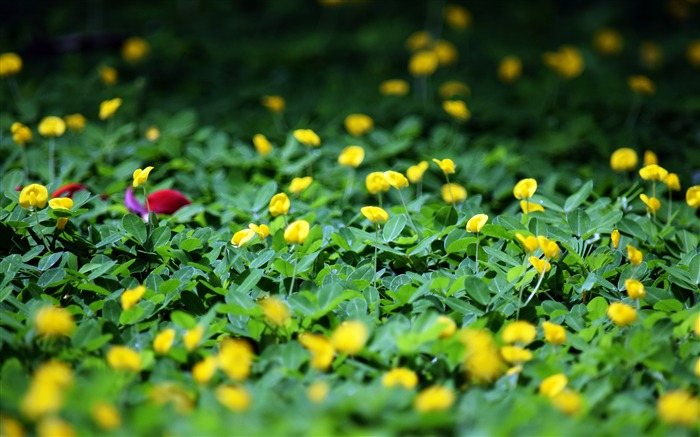 Nature green meadow yellow wildflowers bloom Views:963