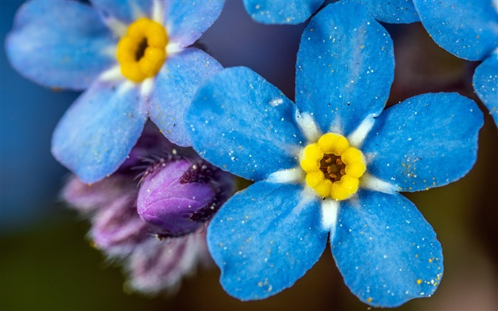 Beautiful Blue Flower Bright Photography Views:4253 Date:6/7/2018 9:46:50 AM