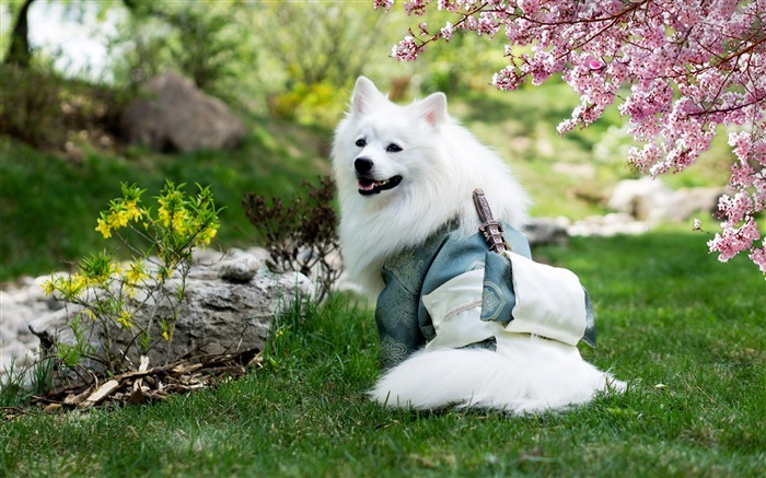 Adorable White Warrior Dog Animal Photo Views:1302 Date:7/15/2018 7:07:40 AM