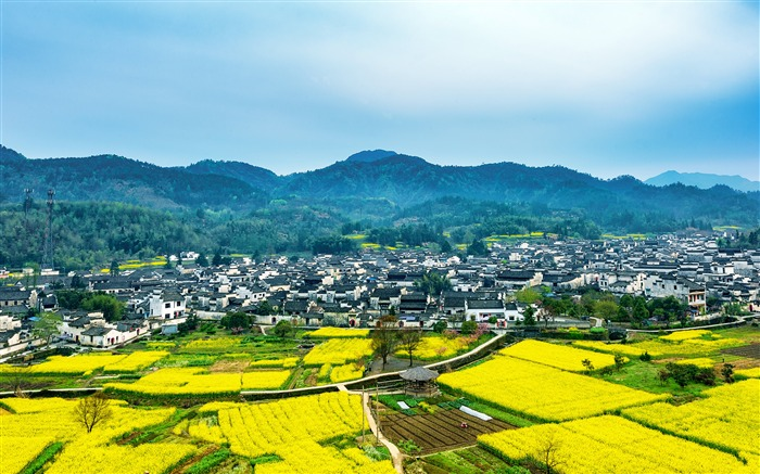 China travel ancient town rapeseed flower photo Views:2014 Date:7/23/2018 7:08:23 AM