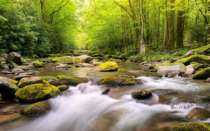 Spring Forest Stream 2020 Nature Scenery Photo Views:3764 Date:3/27/2020 6:14:38 AM