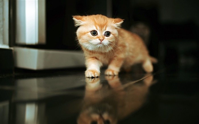 Cute Brown Cat 2020 Animal HD Photography Views:3009 Date:6/7/2020 6:16:49 AM