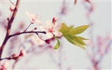 Title:Spring arrival of when-spring theme Desktop wallpaper Views:7805