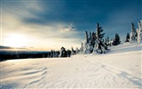 Title:The cold winter will soon be over-winter snow theme wallpaper Views:4775