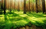 Title:Sunshine through Forest Desktop wallpaper Views:7299