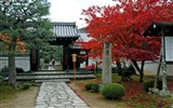 Title:Maple Leaf Red the Kyoto Enkoji Temple Autumn wallpaper Views:8933