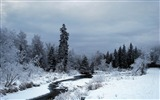 Title:creek-Winter snow scenes wallpaper Views:3881