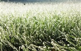Title:frost on grass-Winter snow scenes wallpaper Views:3781