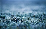 Title:frozen grass-Winter snow scenes wallpaper Views:6984