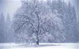 Title:snow falling-Winter snow scenes wallpaper Views:31964