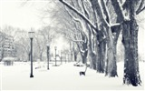Title:snowy park-Winter snow scenes wallpaper Views:34374