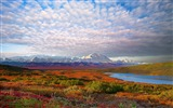 Title:Denali National Park Beautiful Landscape HD Wallpaper Views:3233